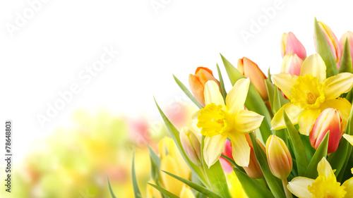 Deurstickers Narcis Freisteller Tulpen und Narzissen zu Ostern