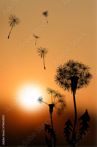 Silhouettes of fading dandelions at sunset - vector illustration