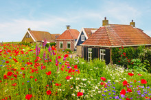 Blooming Wild Flowers In Front Of Dutch Houses
