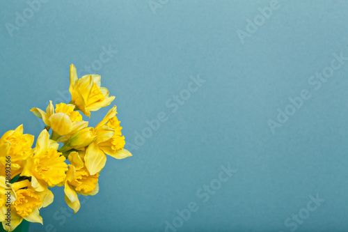 Ingelijste posters Narcis bouquet of narcissus on blue backgroung