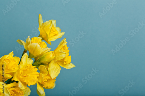 Deurstickers Narcis bouquet of narcissus on blue backgroung