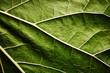 Leinwandbild Motiv Green leaf