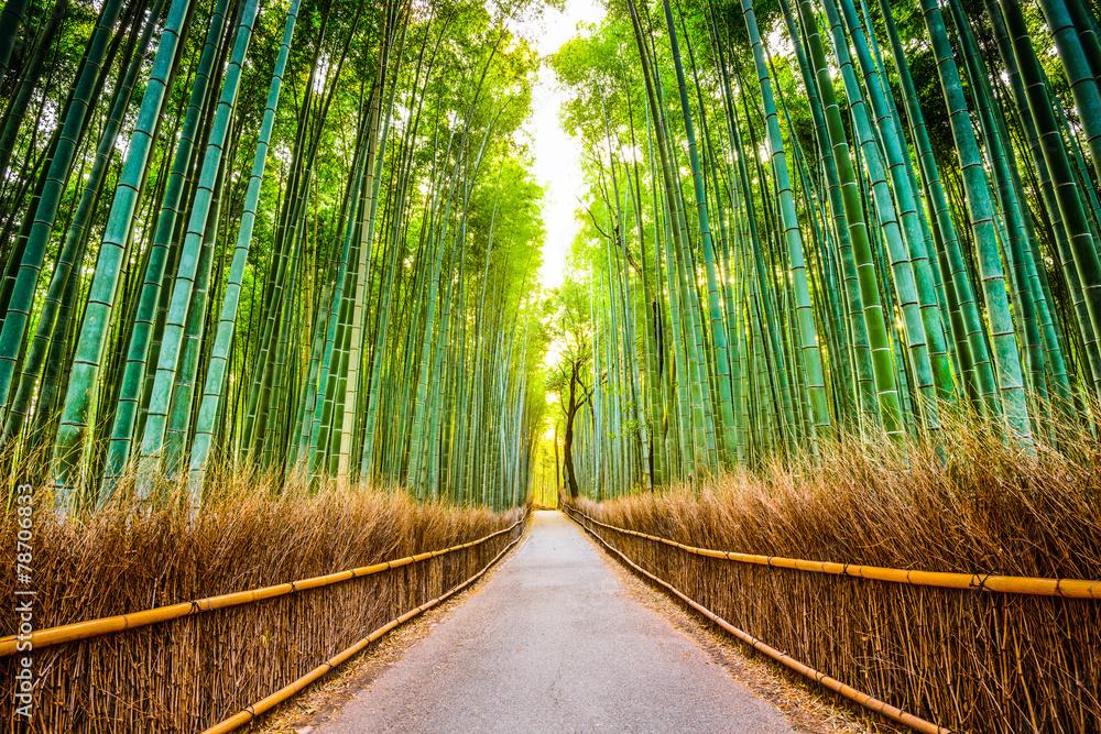 Fototapety, obrazy: Bambusowy Las Kyoto, Japonia