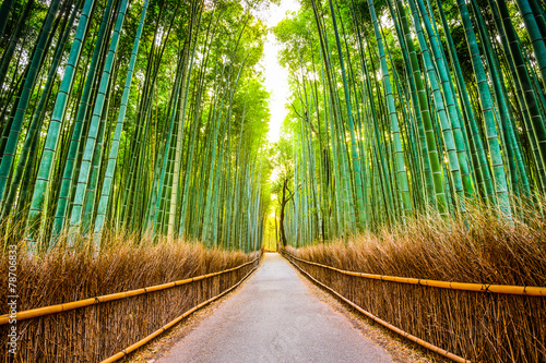 Tuinposter Bamboe Bamboo Forest of Kyoto, Japan