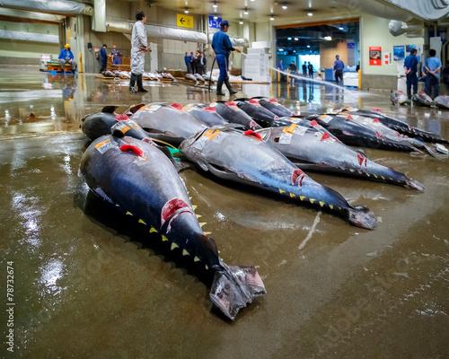 Fényképezés Tuna auction at Osaka Central Wholesale Market