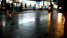 Cars Drive And The Dog Runs Unhinged On A Wet Road After Rain
