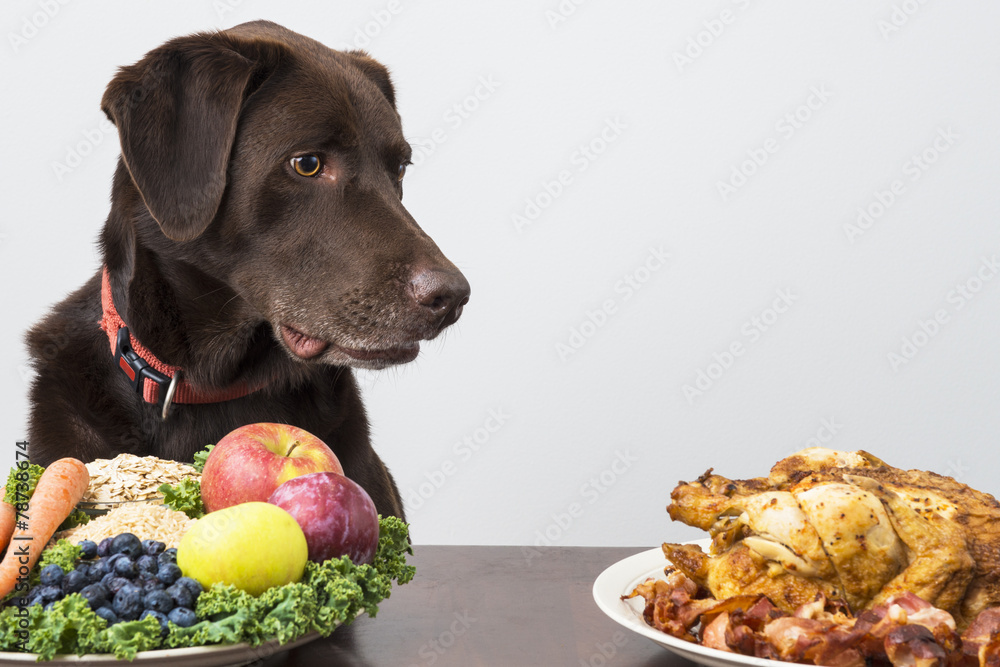 Fototapeta Dog with vegan and meat food