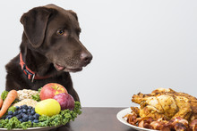 Dog With Vegan And Meat Food