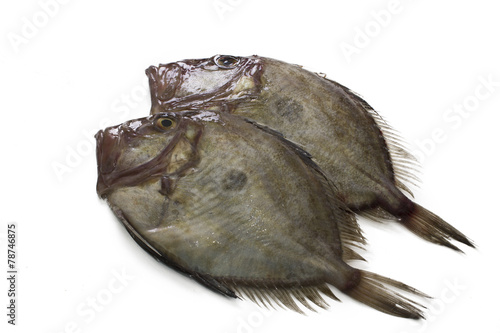 Photo  fresh fish isolated