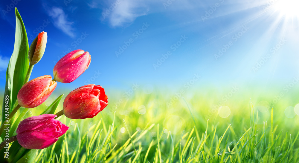 Fototapeta Spring and easter background with tulips in sunny meadow
