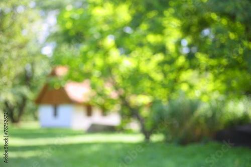 Foto  Dom wśród drzew