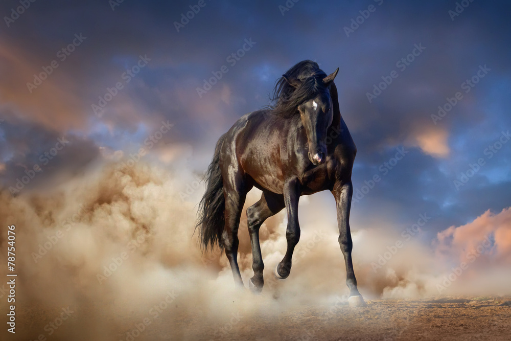 Fototapety, obrazy: Beautiful black stallion run in desert dust against sunset sky