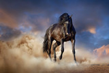 Fototapeta Horses - Beautiful black stallion run in desert dust against sunset sky