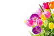 Blumen Frühling Freisteller