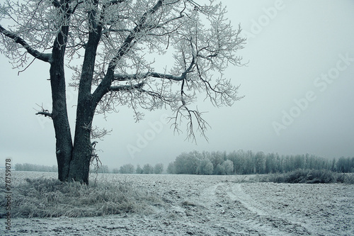 Tuinposter Purper white wood covered with frost frosty landscape