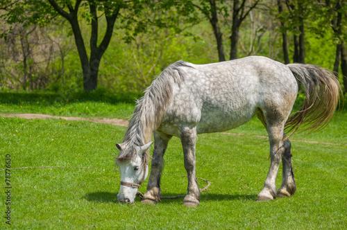 Fotografía  Dappled mare at spring pasture