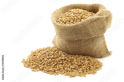 farro grain in a burlap bag with an aluminum scoop on a white ba