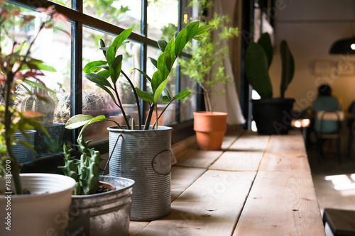 Tuinposter Planten A small plant pot displayed in the window