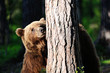 Brown bear with a tree