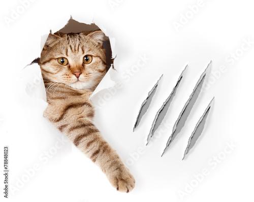 Fotografie, Obraz Funny kočka tapety díry dráp škrábance izolované