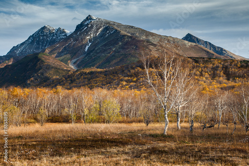 Birch in a mountain valley.  Autumn forest.