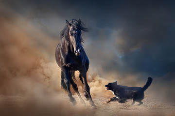 Fototapeta Koń Beautiful black stallion with dog in desert
