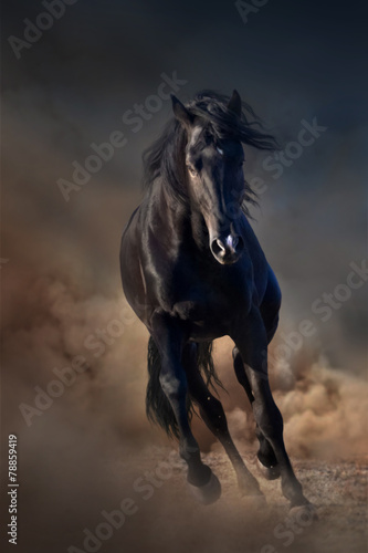 Fotografering  Beautiful black stallion run in desert dust against sunset sky