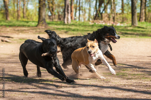 Photo Group of dogs playing in the park