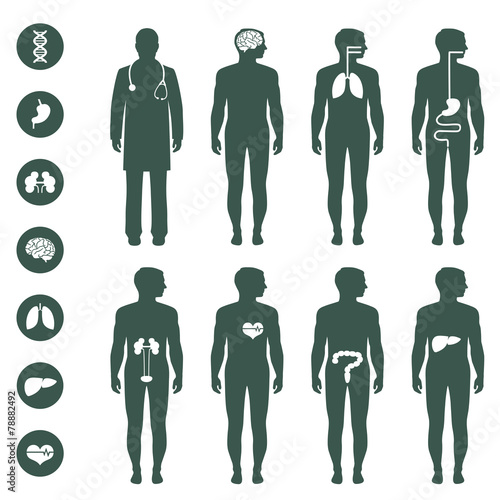 Human body anatomy vector medical organs icon buy this stock human body anatomy vector medical organs icon ccuart Images