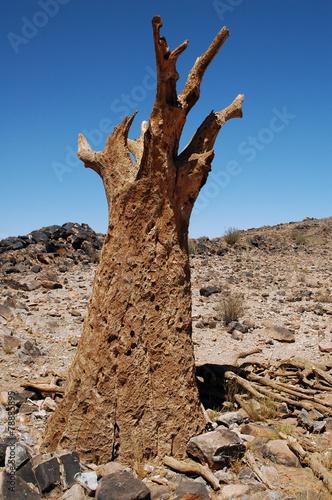 Foto op Plexiglas Zuid Afrika Südafrika Toter Baum