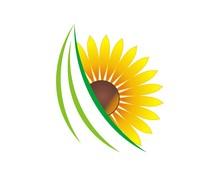 Sunflower V.7