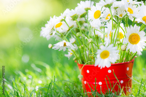 Obraz Spring flowers - fototapety do salonu