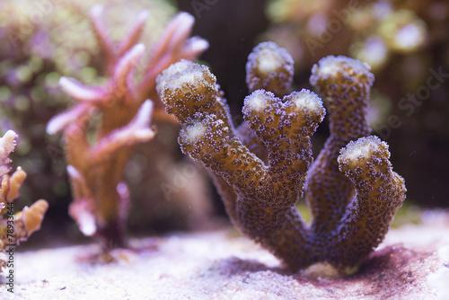 Papiers peints Recifs coralliens coral reef
