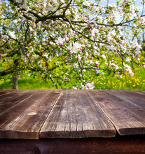 Empty Table In Spring Orchard