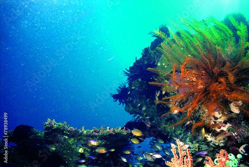 해양 수중촬영