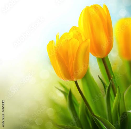 Obraz Rosnące kwiaty tulipanów wiosennych - fototapety do salonu