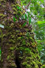 Orchid On Bark Tree