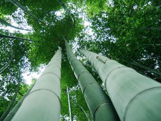 Fototapeta Bambus 풍경이미지