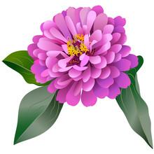 Realistic Pink Zinnia Flower W...