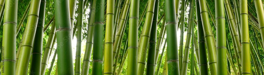 Sunlght peeks through dense bamboo