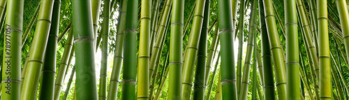 Fotobehang Bamboe Sunlght peeks through dense bamboo