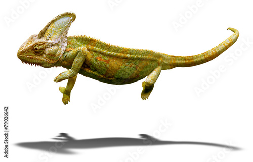 Staande foto Kameleon Colorful chameleon closeup isolated on white with shadow