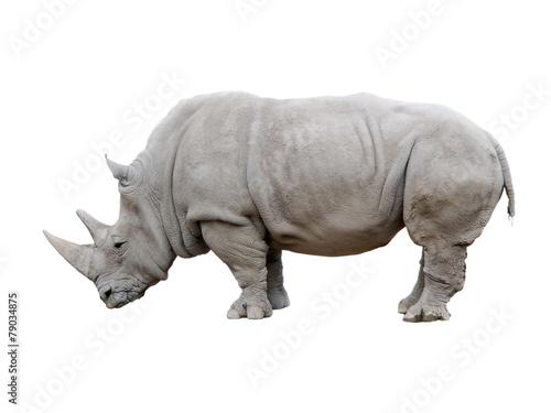 Fényképezés  Rhino