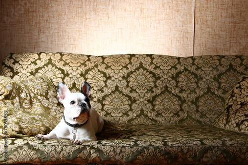 Poster Maroc Hund
