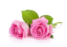 Two Pink Rose Flowers