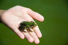 Frog On Hand In Pond