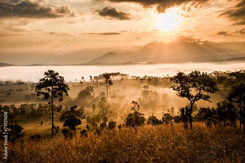 Poster Afrique du Sud sunrise in savanah meadow