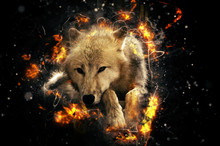 White Wolf, Fire Illustration