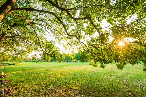 Keuken foto achterwand Bossen Green trees in park and sunlight