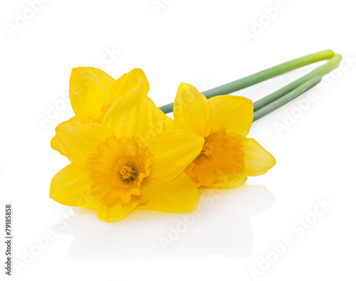 Deurstickers Narcis Yellow daffodils isolated on white background. Easter card with